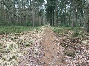 schaapskooi Loenen bospad