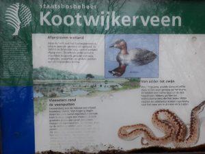 Kootwijkerveen
